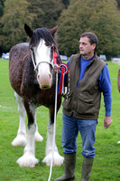 Clydesdale Champion